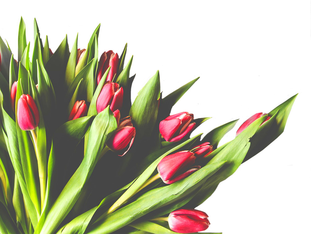 Transport van kwetsbare bloemen en planten door Mercuur Smart Logistics